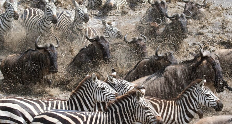 Kenya is home to the Great Wildebeest Migration. © Shutterstock