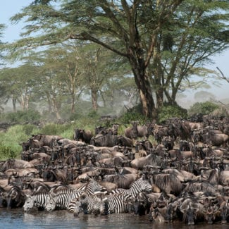 Tanzania is famed for its annual migration. © Shutterstock