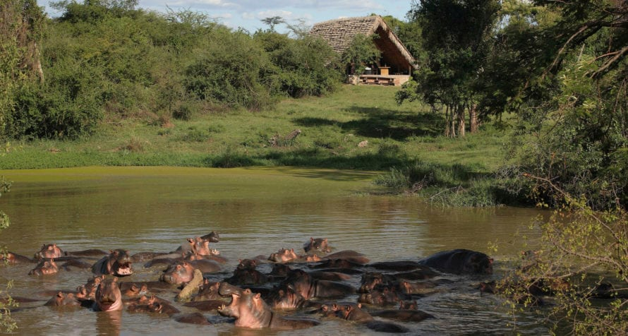 There are resident hippos at &Beyond Grumeti Serengeti Tented Camp. © &Beyond