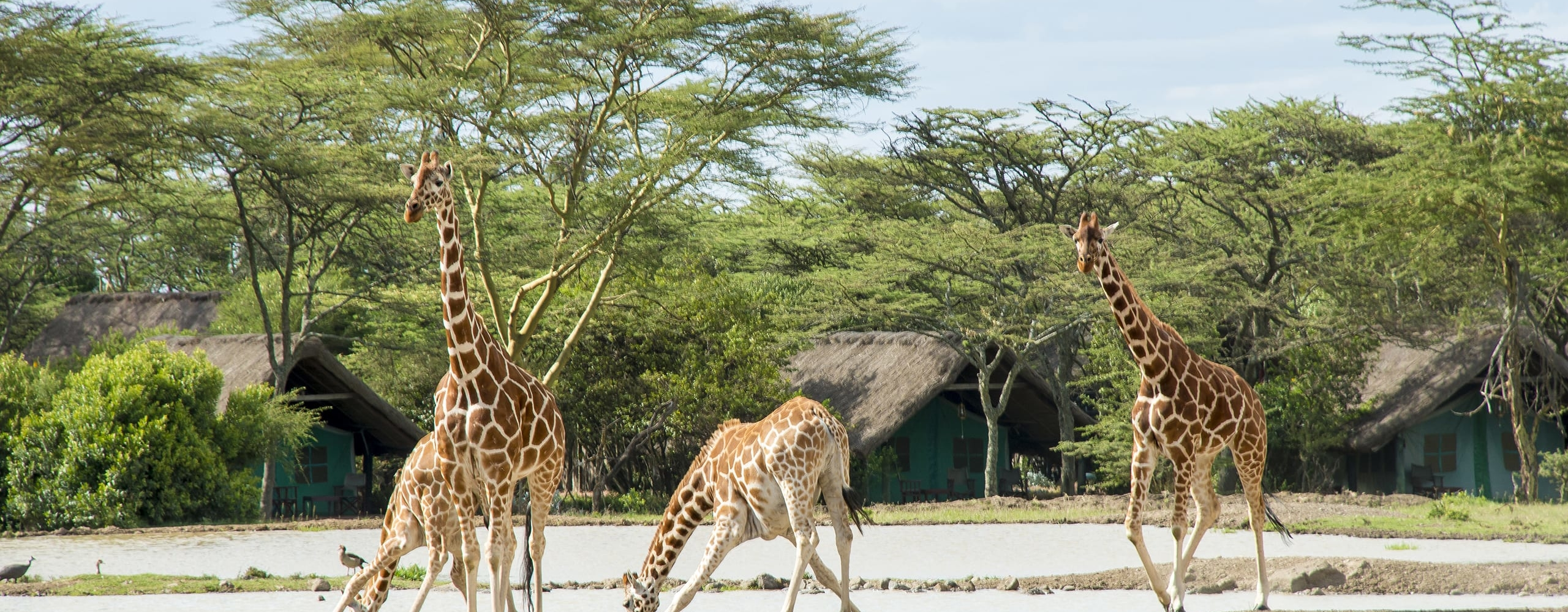 Sweetwaters Serena Camp takes its name from the waterhole around which it was built. © Serena Hotels
