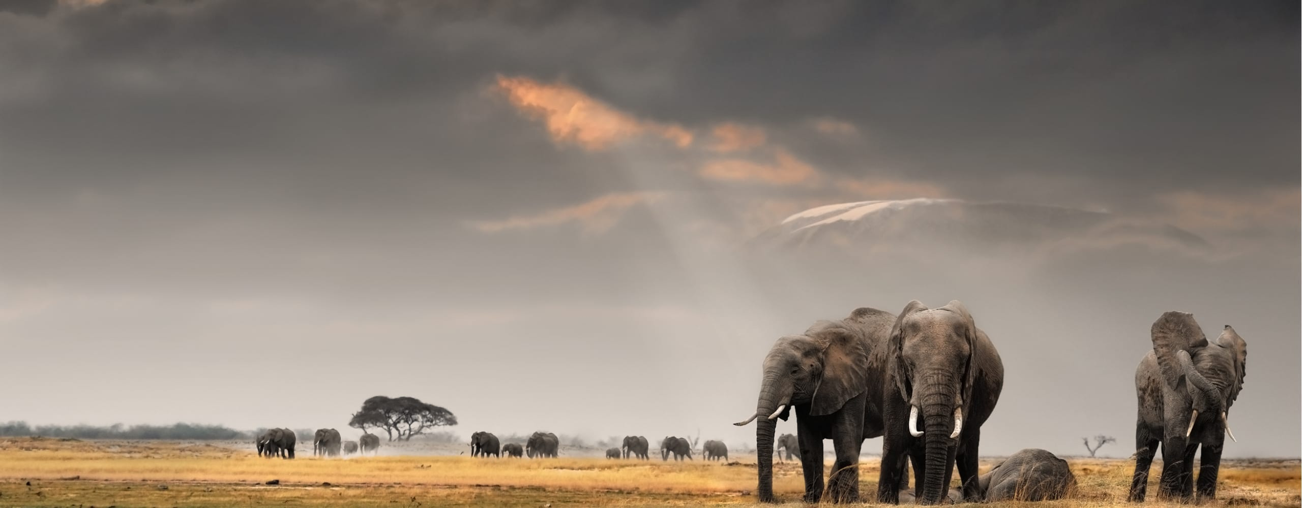 Elephant can be found all over East Africa. © Shutterstock