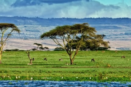 Lake Naivasha's shore is full of game. © Shutterstock