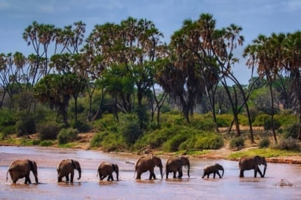 Samburu is well known for the elephant research carried out there. © Shutterstock