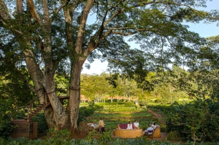 Dine among the greenery at Gibb's Farm. © Classic Portfolio