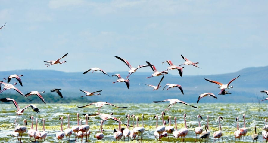 Located just two hours' drive north of Nairobi, Lake Elmenteita feels like a different world. © Serena Hotels