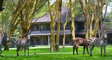 Lake Naivasha Simba Lodge offers a retreat from everyday life with regular wildlife encounters. © Lake Naivasha Simba Lodge