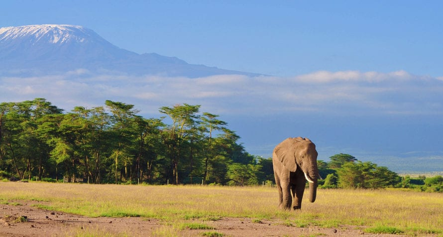 Seeing elephant against the backdrop of Kilimanjaro is an epic experience. © Shutterstock