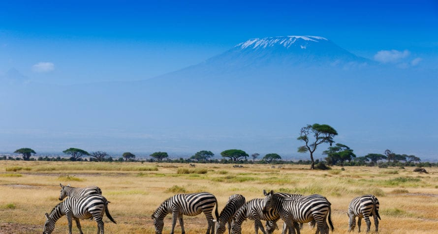 Zebra are just some of the creatures that live in Amboseli. © Shutterstock