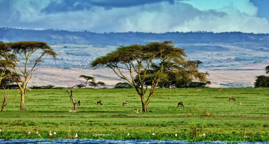 The area around Lake Naivasha Simba Lodge has plenty of game.