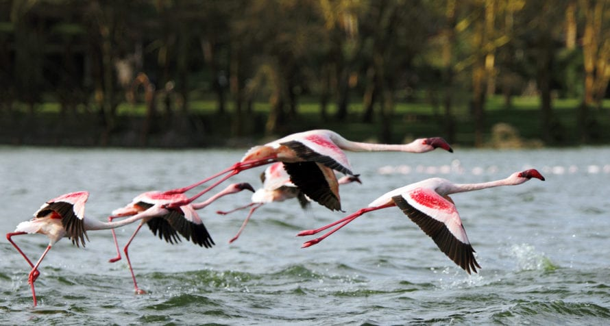 The birdlife is spectacular at Lake Naivasha Simba Lodge.