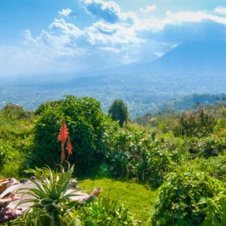 Volcanoes National Park is perhaps the quintessential Rwandan safari destination. © Shutterstock