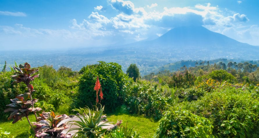 Volcanoes National Park is perhaps the quintessential Rwandan safari destination. © Shutterstock