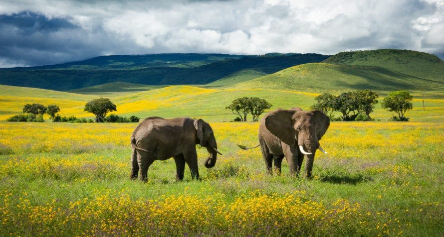 Ngorongoro Crater is at its prettiest when the flowers bloom. © Shutterstock