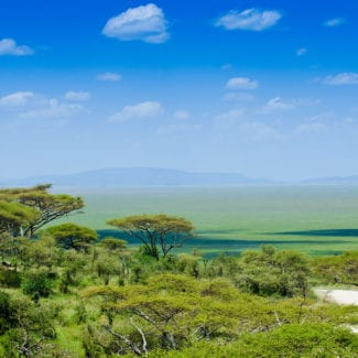 The Serengeti is iconically African. © Shutterstock