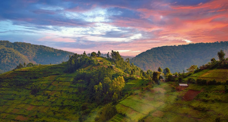 Parts of Bwindi Impenetrable Forest are cultivated. © Shutterstock