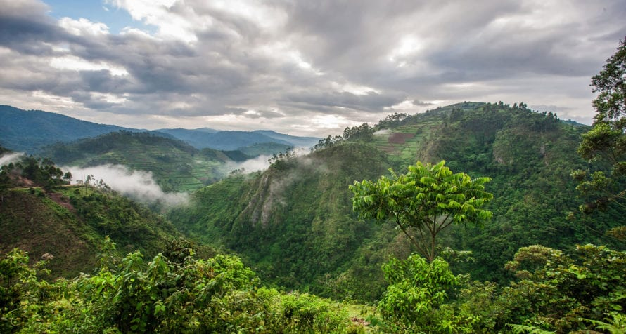 Bwindi Impenetrable Forest has varied topography. © Shutterstock
