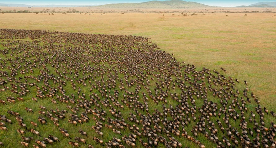 Seeing the migration on the move in the Serengeti is awe-inspiring. © iStock
