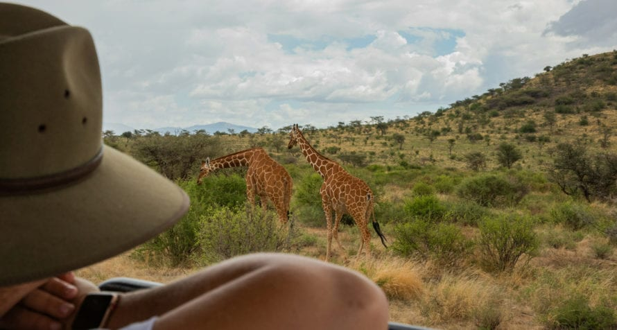 Graceful giraffe are a favourite to see. © Wildlife Safari