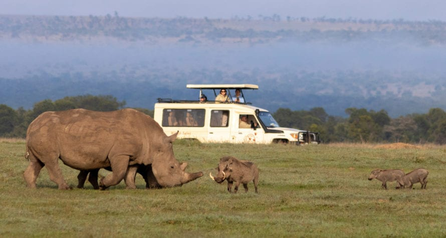 Rhino and warthogs can be seen in Ol Pejeta. © Wildlife Safari