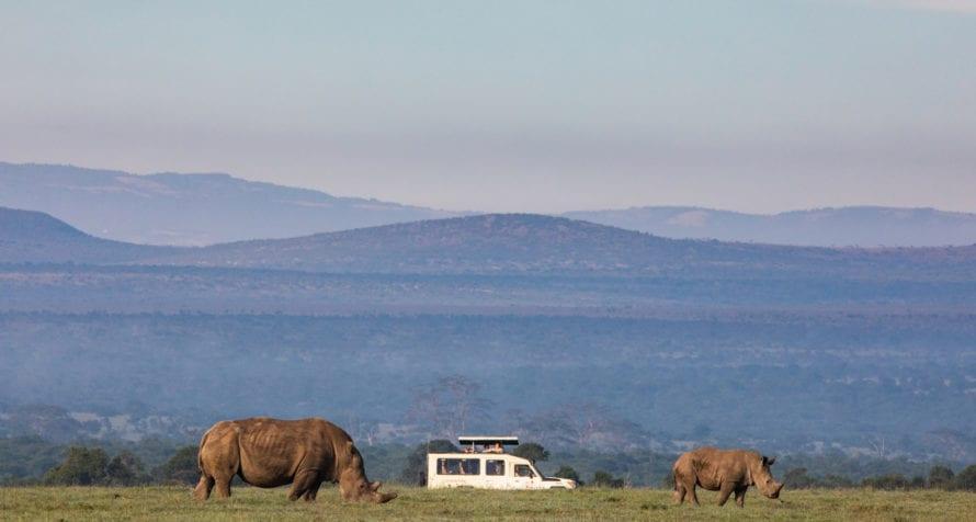 Ol Pejeta is home to white rhino. © Wildlife Safari