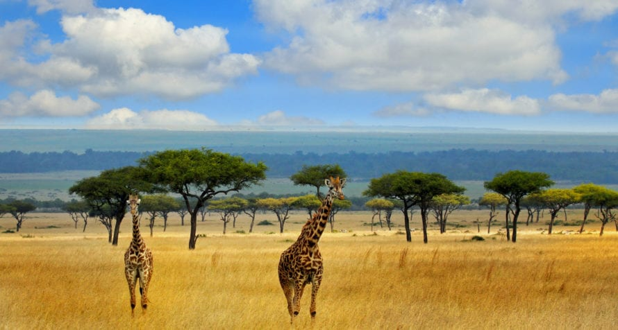 The Masai Mara is a wild wonderland. © iStock