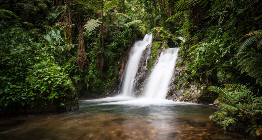 Bwindi Impenetrable Forest is an Eden. © iStock
