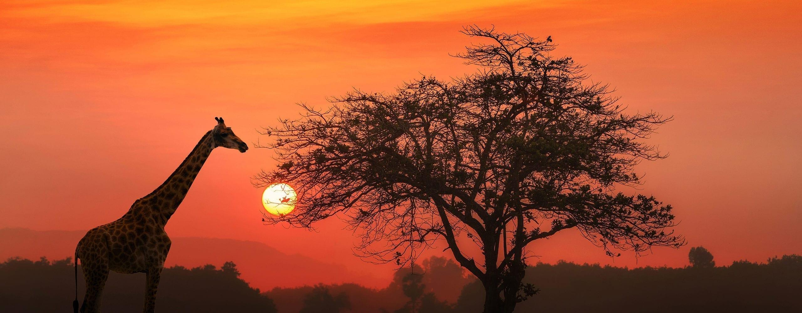 About Wildlife Safari. © iStock