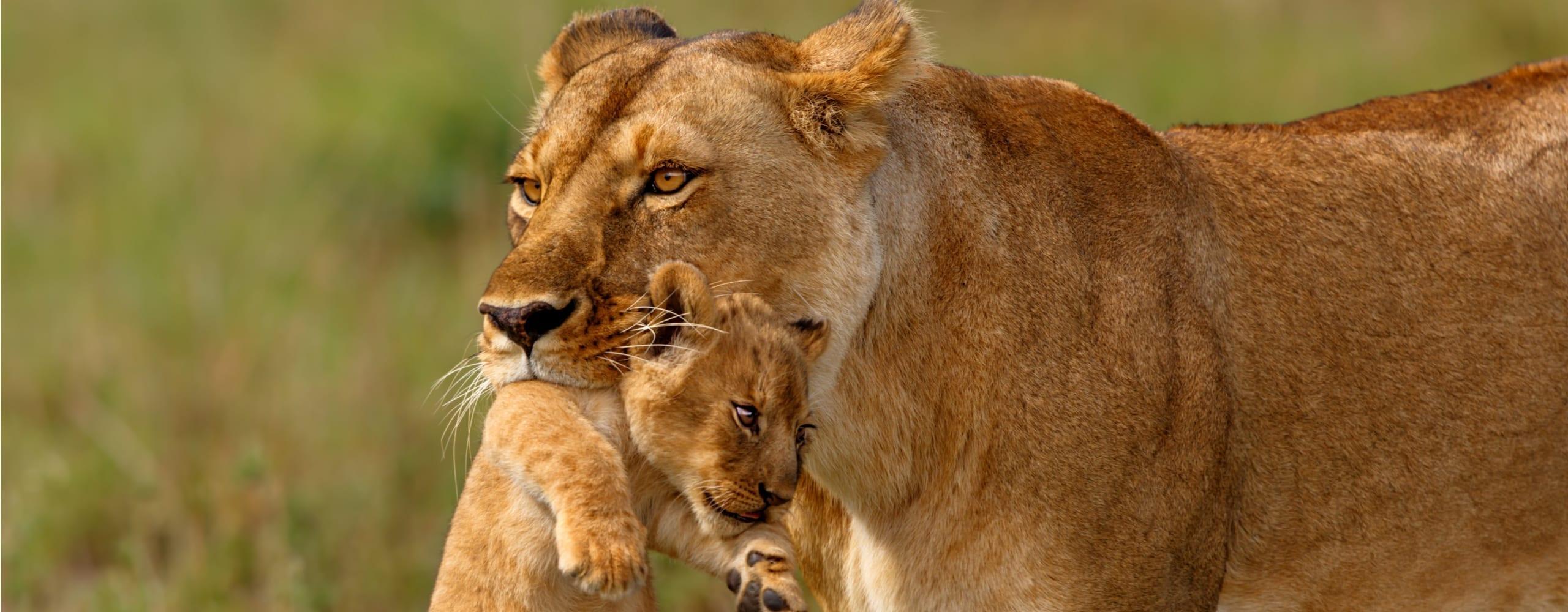 East African safari destinations. © Shutterstock