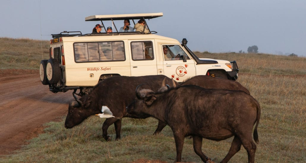 The Wildlife Safari vehicles have pop-out roofs. © Wildlife Safari