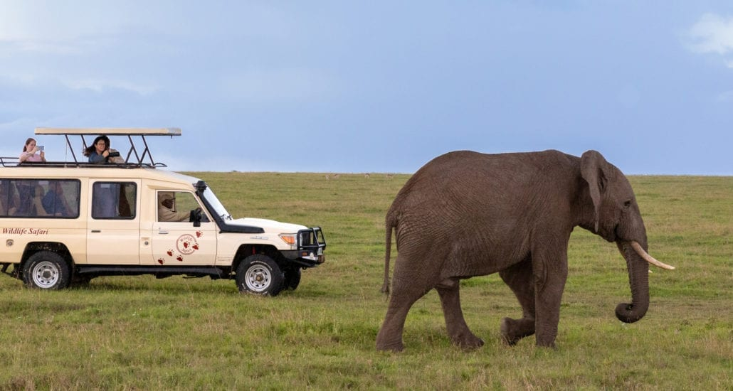 Wildlife Safari vehicles allow you to go off road, where permitted. © Wildlife Safari