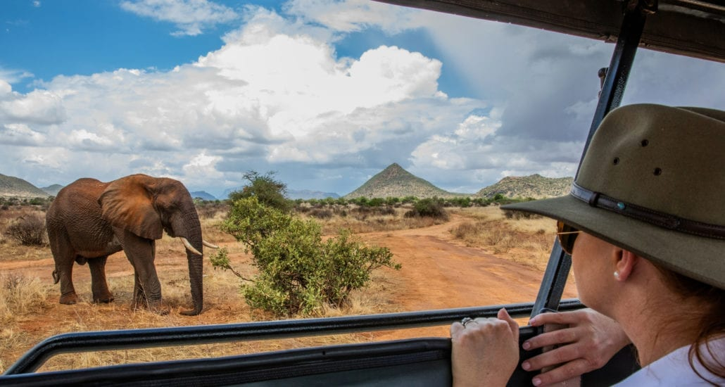 You can stand in the Wildlife Safari vehicles, for better viewing. © Wildlife Safari
