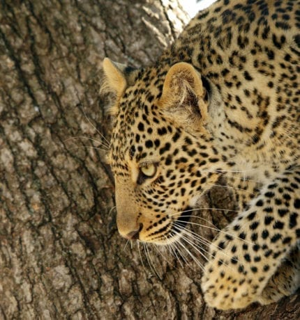 Wildlife Safari Kenya | Experienced Guides