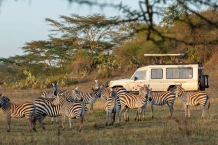 Wildlife Safari Kenya | Top quality safari vehicles